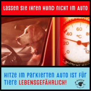 Read more about the article Lassen Sie Ihren Hund bei Hitze nicht im Auto.