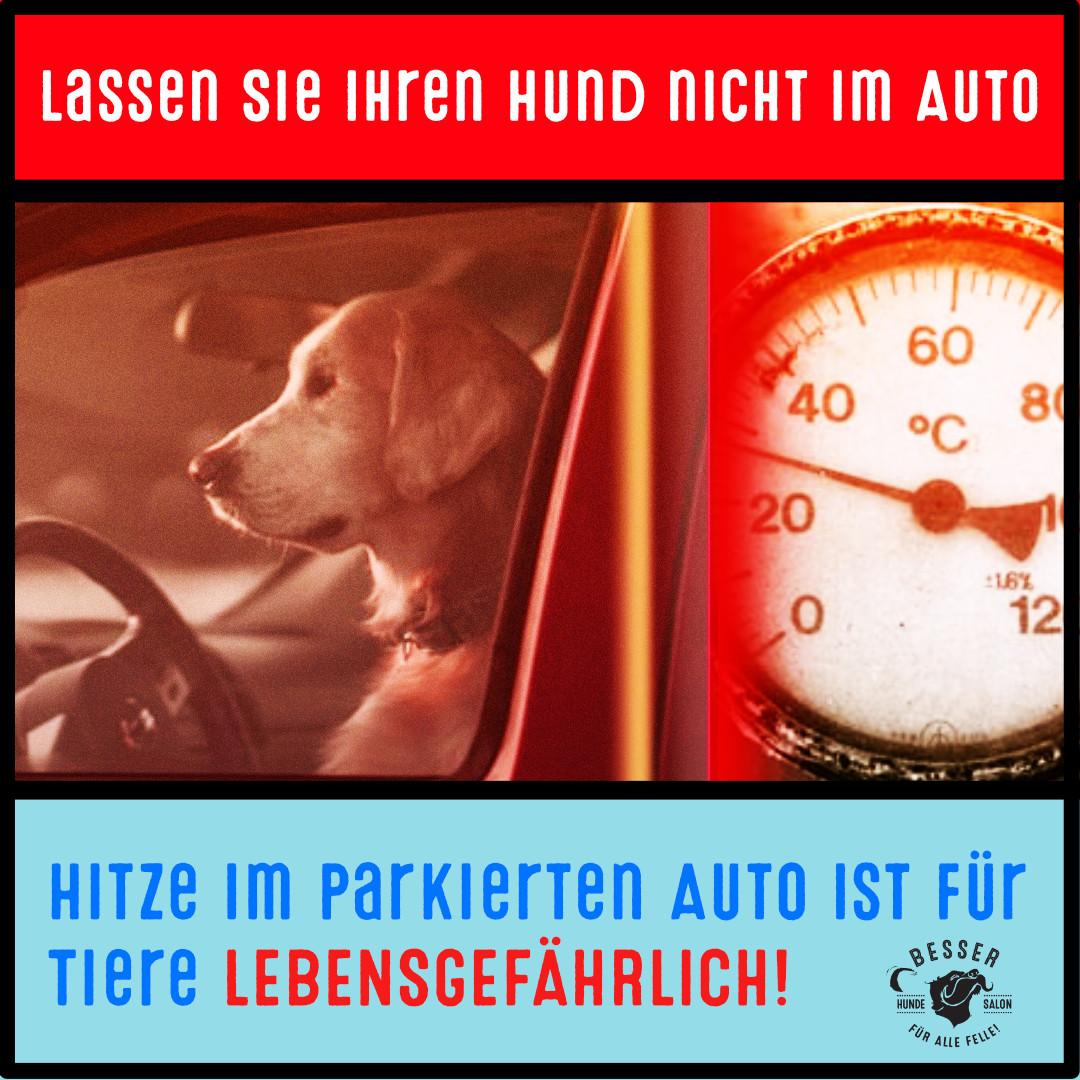 You are currently viewing Lassen Sie Ihren Hund bei Hitze nicht im Auto.
